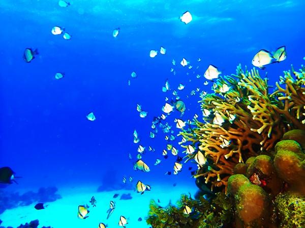 石垣島の珊瑚