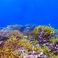 八重山のサンゴ礁